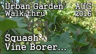 2016 Aug 6th Albopepper Urban Garden Walk-thru: Battling Squash Vine Borer & Edible Landscaping