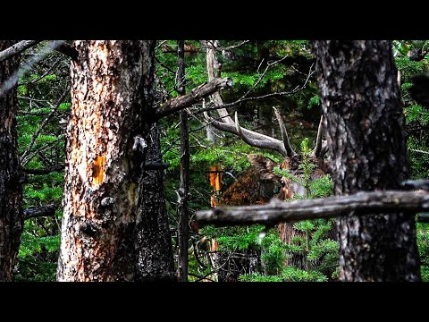 We Found A HUGE BULL! Public Land ELK HUNTING