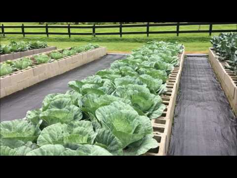 Growing Your own Greens