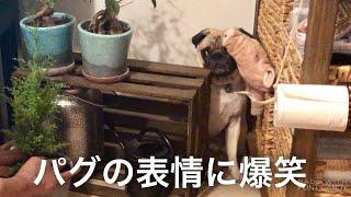 植木鉢の周りで遊んでたおまめさん   ご想像通り鉢を倒してしまった後の...