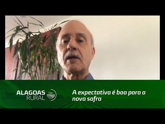 A expectativa é boa para a nova safra de cana-de-açúcar em Alagoas
