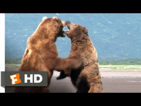 Grizzly Man (5/9) Movie CLIP - Bear Fight (2005) HD