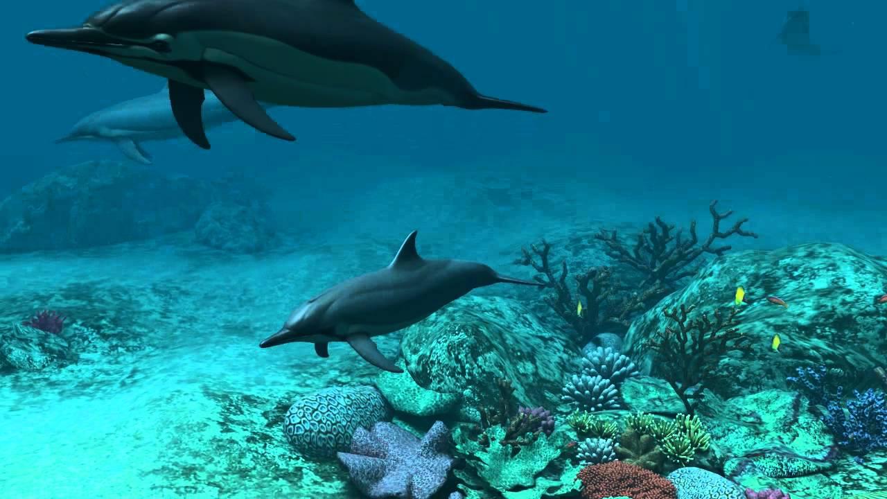 3d Fish Hd Live Wallpaper Dolphins 3d Screensaver Youtube