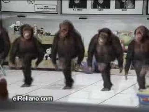 Dancing Chimps YouTube