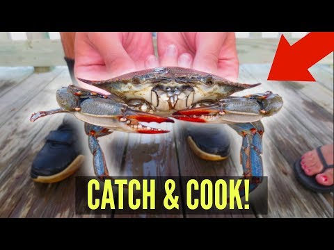 Catch, Cook, Eat! BLUE CRABS!! How To Catch & Eat Crabs!