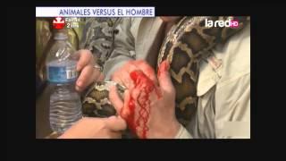 Impactantes imágenes de animales v/s el hombre