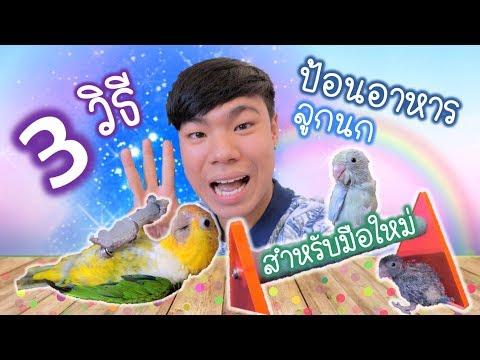 3 วิธีป้อนอาหารลูกนก สำหรับมือใหม่ | My PET EP.4