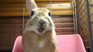 バナナ姫 バナナ姫ルナ 検索動画 13