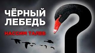"""Кто такие """"черные лебеди""""? Нассим Талеб - философия и цитаты"""
