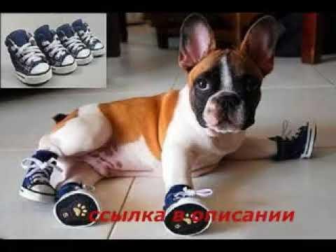 Купить одежда для собак премиум качества на сайте my-zoo. Com. Ua для вашего любимца ❖ большой выбор ✈ отправка в день заказа ☆ бонусная система. Жилетка попона для собак крупных пород p-12 одежда для собак цена от 345 грн. Жилетка для собак
