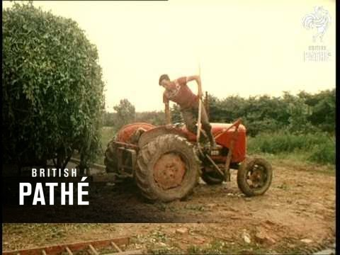 Farm Automation (1957)