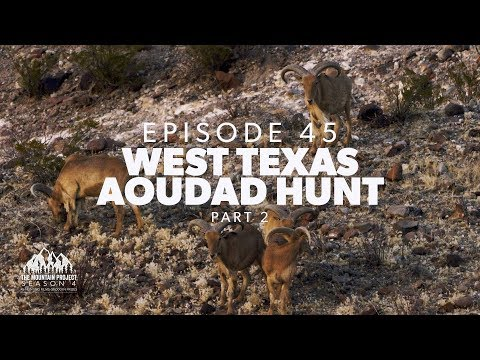 We pull it off in the last half hour! - Ep.45 - West Texas Aoudad Hunt