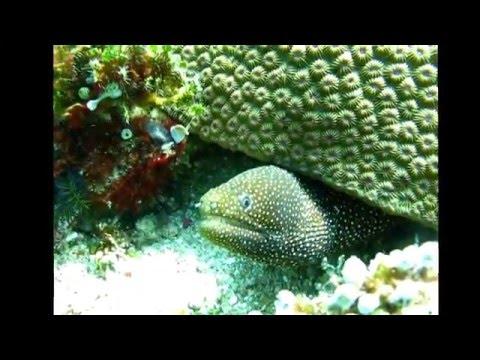 Scuba Diving Senggigi Alang Alang Rock