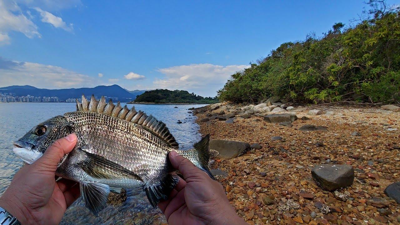 磯釣技巧 | 全游動小總結 (1):吐露港的步兵釣場,人工石壆和天然砂石灘,如何選擇釣組?