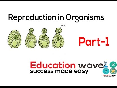 Biology  Reproduction in Organism Class 12 In Hindi Part-1