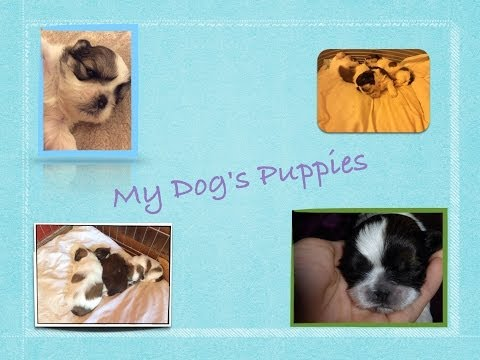 My Dog's Puppies