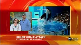 killer whale attack.flv