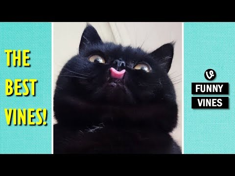 Funny VINES that will make you LAUGH YOUR HEAD OFF – Best VINE compilation