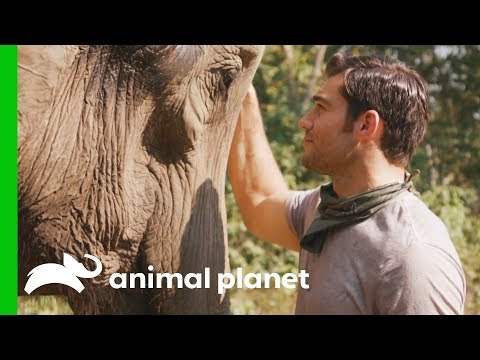 Evan Shares Heartfelt Encounter with a Gentle Elephant | Evan Goes Wild