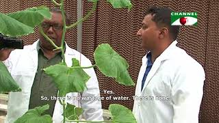 Advanced greenhouses in Bangladesh