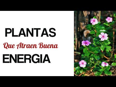 Coloca estas plantas en el interior de tu hogar y seguro for Plantas en el hogar