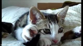 Видео с кошками. Спящие коты. Подборка