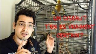 7 Raisons de ne PAS avoir d'oiseaux!