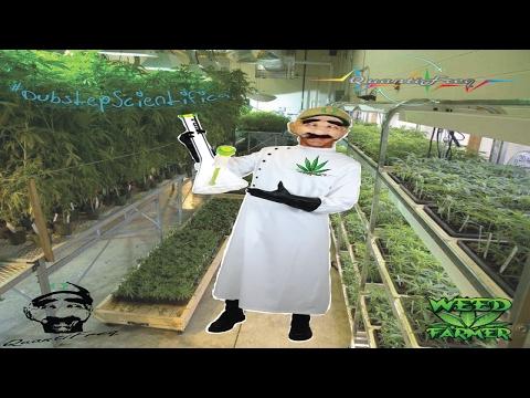 Cannabis QuantiFreq Music™ - High Quality CannaBass - Dubstep (Scientific'a)