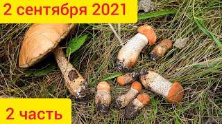 Где растут грибы ранней осенью в сентябре