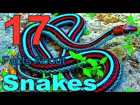 17 Facts About Snakes