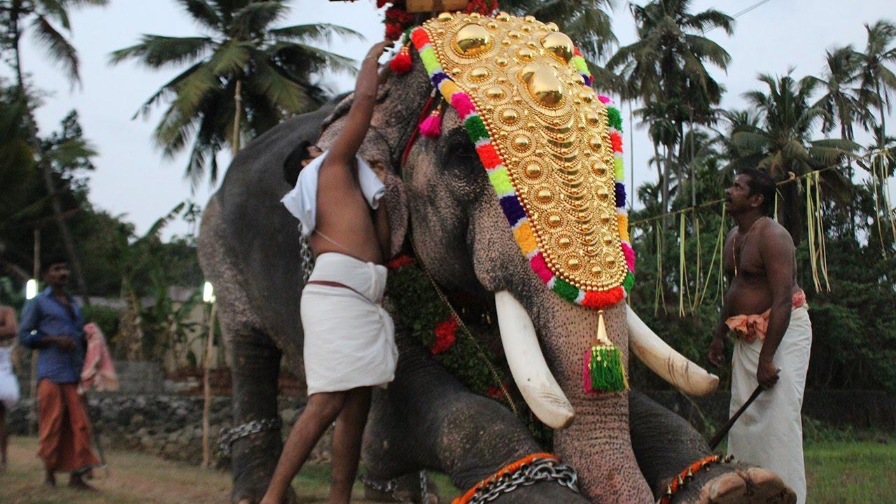 Kerala Elephant Kuttankulangara Arjunan at Peruvanam ...
