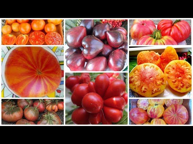 Поступление более 40 новых коллекционных сортов томатов и перцев!