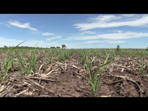 Native Grass Seeding Expectations | Part 1