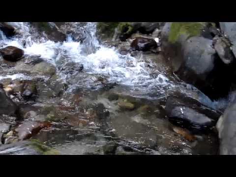 Chengi Falls near Kolakham, Darjeeling District