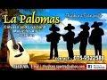 Download Wedding calypso band sri lanka MP3 song and Music Video