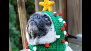 Собаки, переодетые в новогодние ёлки