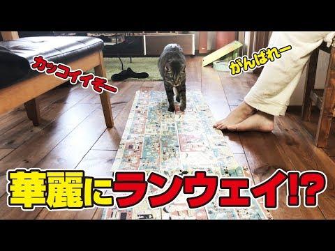 新キッチンマットも猫さんにかかればレッドカーペットに!?