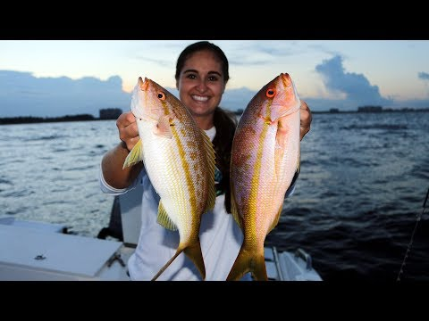 Reef Snapper Fishing- Catch And Cook Yellowtail And Mangrove!