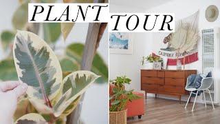 House Plant Tour | Alli Cherry