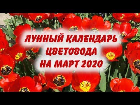 Вопрос: Какие цветы можно сеять в феврале и марте 2020 год, когда посадить?