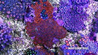 Weekly Live Coral Stocklist Report - Wholesale Only - December 22, 2015