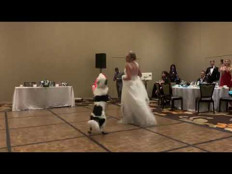 Tony Sandoval on The Breeze - Bride Has First Dance with Her 'Best Dog'!