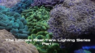 The Ultimate Reef Tank Lighting - AmericanReef Saltwater Tank ReefKeeping Video
