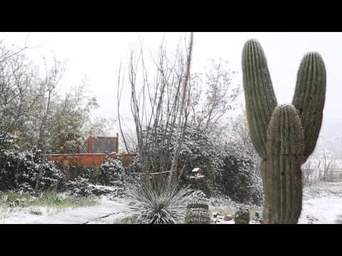 Snow Day in Globe, Arizona
