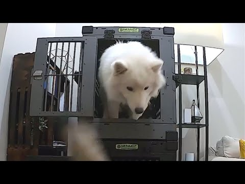 Crate Training With Impact Dog Crates