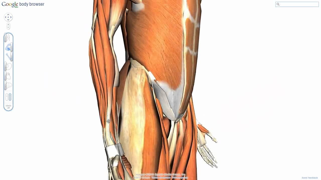 adamianis anatomia -Google Body Browser - YouTube