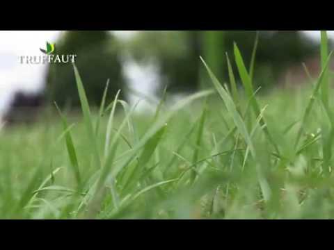 Comment Semer Du Gazon Toutes Les Etapes Pour Semer Du Gazon Au Jardin Truffaut Youtube