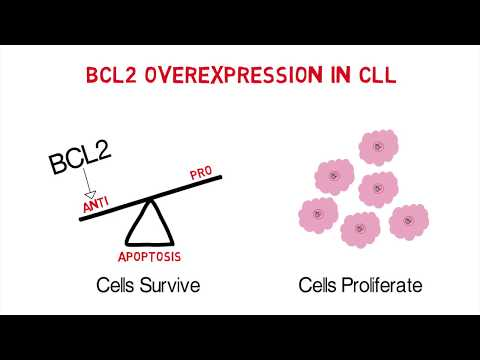 CLL Whiteboard #3: Mechanisms of Action of Anti-Apoptotic BCL2 Inhibitors