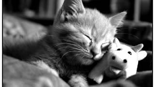 Красивые фото котов