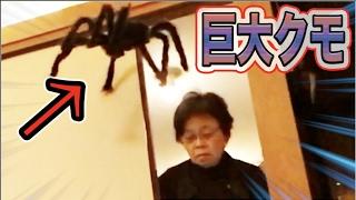 クモって気持ち悪いですよね。今日はそんなプロテインばっかり食べてい...